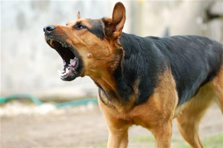 Pourquoi mon chien aboie ?